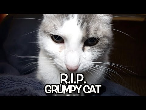 R. I. P.  Grumpy Cat – We'll never forget you.