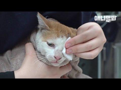 사람을 가장 무서워했던 고양이가 다시 사람에게 다가가야했던 이유 ㅣ Cat Approaches Humans Who Are The Biggest Fear For Her..