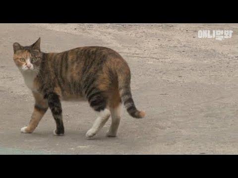 벽 속에 갇힌 친구를 구하기 위해 이 고양이가 한 행동 l Righteous Cat Takes A Move To Save A Friend Stuck Inside The Wall