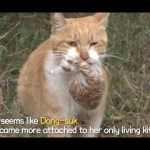 A Heartwarming Tale Of This Mother Cat Always Carrying A Bag Of Food | Kritter Klub