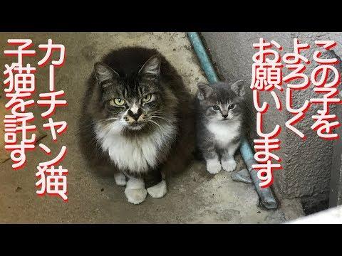 因縁の母猫、子猫を人間に託しに来る The mother cat's request for her kitten