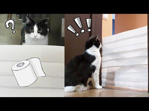 Cat vs Wall of Toilet Paper. New Challenge!!!