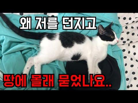 고양이 꼬미가 살해 당했습니다.[고양이탐정]Cat killed by a man