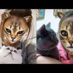 🤣Funny Dogs & Cats Scared Of Cat Mask Filter – Dog & Cat Reaction To Mask Filter | CuteVN Animals