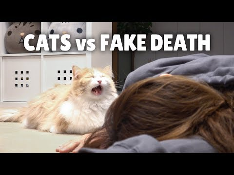 Cats vs Fake Death