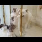 목욕하는 강아지를 구출하는 고양이