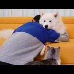 강아지와 고양이를 오~랫동안 안아봤어요