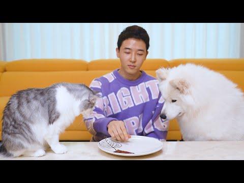 강아지와 고양이 앞에서 '안보이는 음식'을 먹는 척 해봤더니 ㅋㅋㅋ