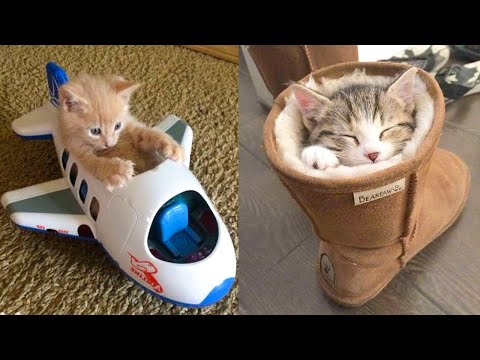 Baby Cats – Cute and Funny Cat Videos Compilation #21 | Aww Animals
