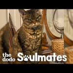 Aggressive Cat Melts When She Gets To Know Her New Mom | The Dodo Soulmates