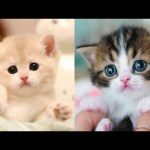 Baby Cats – Cute and Funny Cat Videos Compilation #27 | Aww Animals