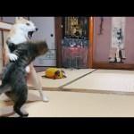 何でそうなるかね、あんた達は Cat and Dog Play Fighting