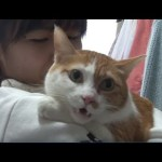 Cat Talks Non-Stop For 5 Years To Say 'This' To His Family | Kritter Klub