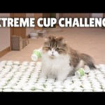 Extreme Cup Challenge! Can My Cats Cross the Course?