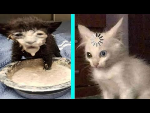 BEST DANK CAT MEMES COMPILATION OF 2020 PART 10 (from TikTok)