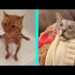 BEST DANK CAT MEMES COMPILATION OF 2020 PART 13 (from TikTok)