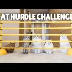 Cat Hurdle Challenge! Can My Cats Make the Jump? | Kittisaurus