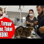 CANIMIZI ZOR KURTARDIK! 😱 Kedi Saldırısında Yeni Seviye: İstanbul! 😅 #inanoğlu #kedisaldırısı