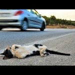 Attempt. Rescue a cat in a car accident but lost life/Emotional Burial of  Kitten RIP