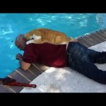 """1M cute ways Cat want to say """"I LOVE YOU"""" to their owner –  Cute cat Videos"""