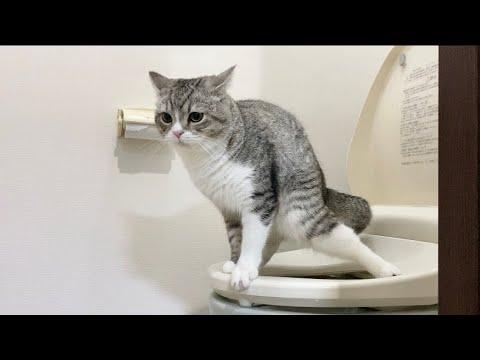 猫が人間用のトイレでうんちするようになりました…笑