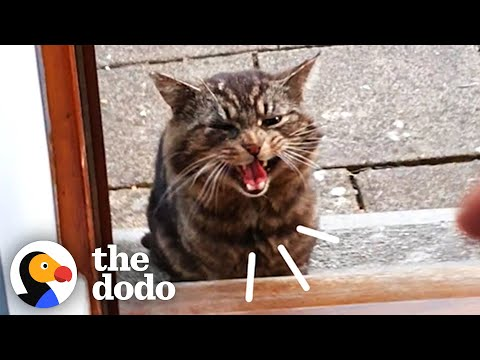 Stray Cat Decides To Move Into Guy's House | The Dodo Cat Crazy