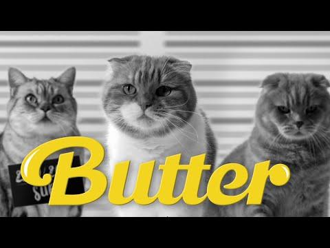 BTS( 방탄소년단) 'Butter' MV  고양이 뮤직비디오 커버