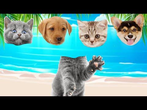 CUTE PETS Dog, Cat,  Rabbit, Hamster,  귀여운 애완 동물 개, 고양이, 토끼, 햄스터
