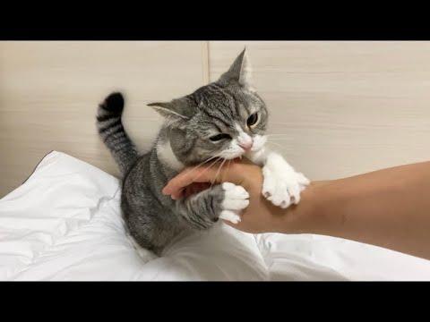 丸一日家を空けたら寂しがり屋の猫にブチギレられました…