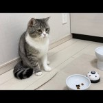 楽しみにしてたご飯が3粒しかなかったときの猫の反応がこちら…w