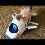 OMG So Cute Cats ♥ Best Funny Cat Videos 2021 #114