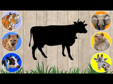 CUTE ANIMALS Guinea Pig, Ferret, Hare, Cat, Dog, Hamster 기니 돼지,흰 족제비,토끼,고양이,개,햄스터 #5