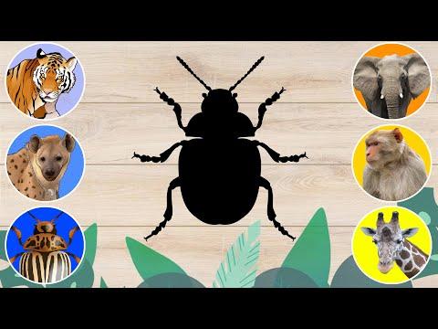 CUTE ANIMALS Guinea Pig, Ferret, Hare, Cat, Dog, Hamster 기니 돼지,흰 족제비,토끼,고양이,개,햄스터 #10