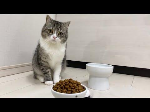 とんでもない量のご飯が出できたときの猫の反応がこちらですw