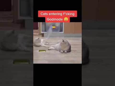 Best Funny Cat Videos 😹 Cute Cats Moments
