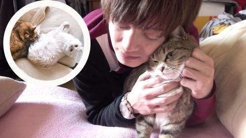 ツインズの猫ちゃちゃ・マロン・ぷーちゃんの種類や誕生日&年齢は?wiki風プロフィールで徹底解説!