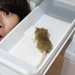[水溜りボンド]【トミー崩壊】冷蔵庫開けたらハトより大嫌いなネズミ死んでるドッキリww