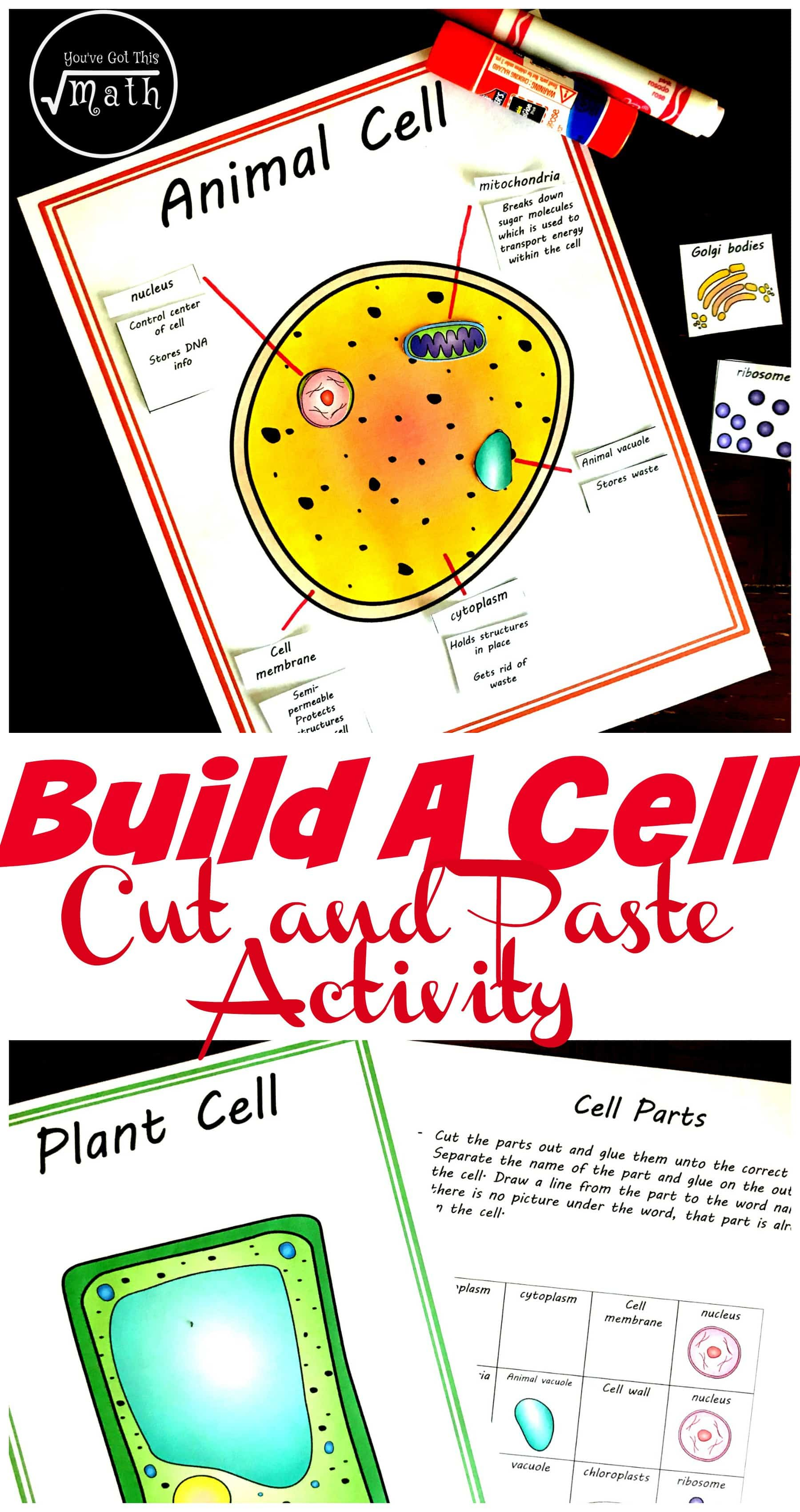 Free Cut and Paste Animal and Plant Cell Worksheet (Comparing Cells) [ 3400 x 1800 Pixel ]