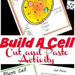 3d Animal Cell Coloring Diagram 2000 Lincoln Continental Fuse Free Cut And Paste Plant Worksheet Comparing Cells Build Your Own