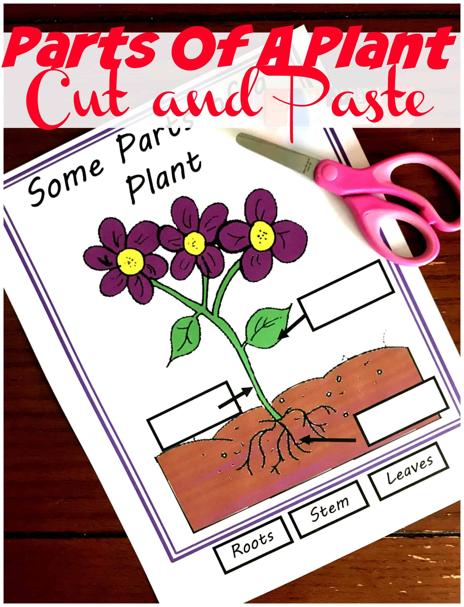 Grab these parts of a plant worksheet to practice where roots, stems, and leaves are on a plant. There are clip art pictures and real pictures to label. They are perfect for Science Cycle 1 Week 9.