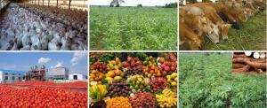 Agricultural produce sellers Association