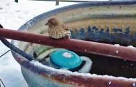 Soğuktan Donmak Üzere Olan Kuşu Kurtarma