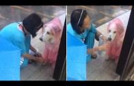 Sokak Köpeğine Yağmurluk Giydiren Kadının O Görüntüleri Viral Oldu