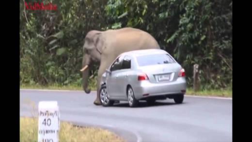 arabanın üzerine oturan fil