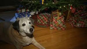 köpeği ölen babaya hediye edilen köpek
