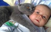 Bebekleri Koruyan Kahraman Kediler