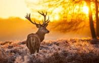 Doğanın Nefes Kesici Güzelliği