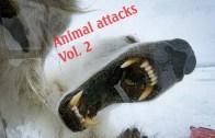 Vahşi Hayvanlarla Tehlikeli Karşılaşmalar