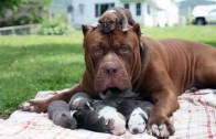 Annelik Duygusunu Dibine Kadar Yaşayan Hayvanlardan Harika Anlar
