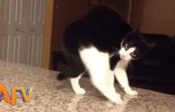 Kedilerin Sizi Şaşırtacak Akılalmaz Hareketleri